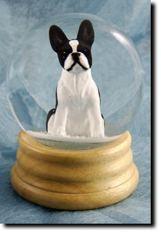 Adult Boston Terrier PRODUCT