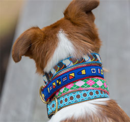 https://gallery.mailchimp.com/de9f59901362487ec255b9f61/images/belted_cow_dog.jpg